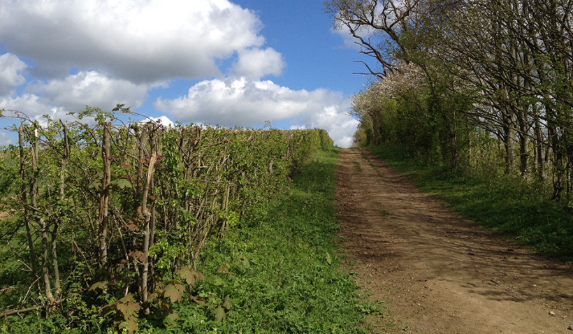 Hedgerow Management