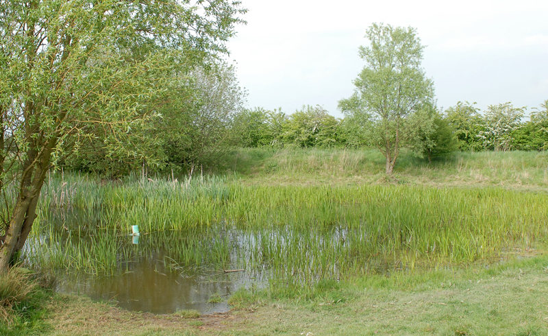 Norton Pond to be transformed to encourage wildlife
